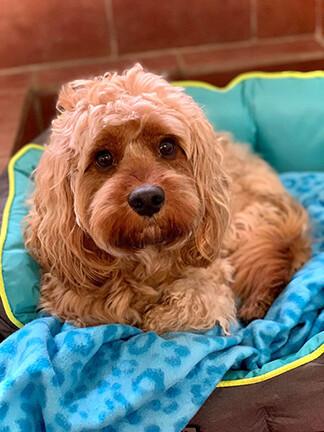 Little Seb is so precious 💜 | Broomhillfarm Luxury Dog Hotel
