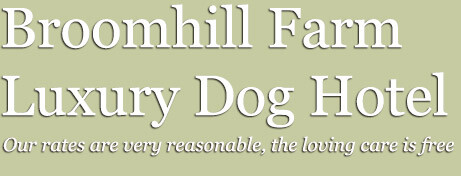 Broomhillfarm Luxury Dog Hotel